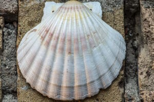 Scallop Shell of pilgrimage by photographer Jill K H Geoffrion